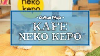 Neko Kepo Cafe di Surabaya Tawarkan Sensasi Minum Kopi Sambil Bermain dengan Kucing