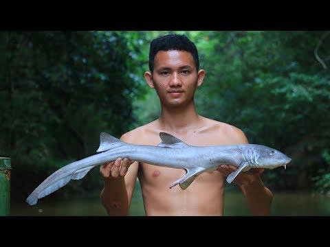 Máte rádi žraloka?