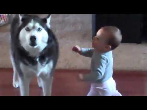 Bimbo parla con il suo cagnolone. Vedere per credere