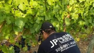 JP FARM LABOR CONTRACTING LLC. Oregon
