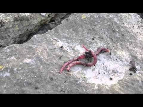 Die Analyse der Fäkalie auf die Würmer wird wieviel