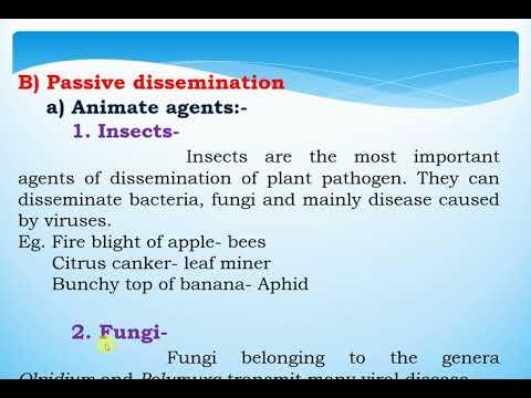Que son los parasitos oxiuros