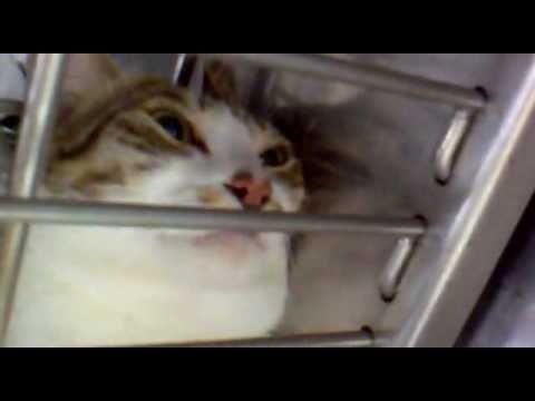 貓咪說我不要剪指甲!好可愛!