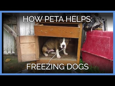 How PETA Helps Freezing Dogs Survive The Long, Harsh Winter