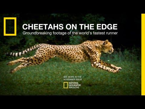 Cheetahs on the Edge — Director's Cut | National Geographic thumbnail