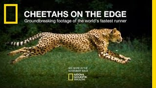 Cheetahs on the Edge — Director's Cut | National Geographic