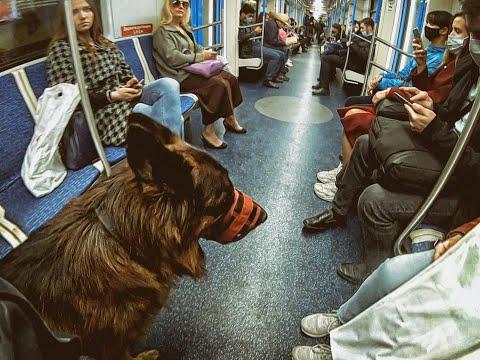 собака в городе - проезд с собакой в метро