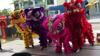 New house lion and dragon dance 2017 part 3