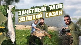 Золотой сазан рыбалка подольский район