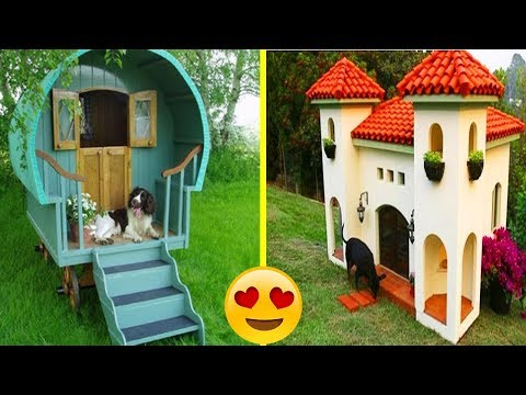 Most Creative & Beautiful Dog Houses