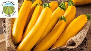 Summer Squash and Cucumbers You Should Be Growing!