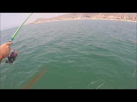 Video di pesca su pesci enormi