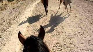 Negociation with a bedu in Petra