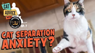 What does Separation Anxiety look like in your cat and how can you help?