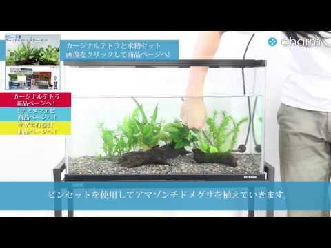 【charm】カージナルテトラ・水草と水槽セットの設置1 -器具・水草篇-