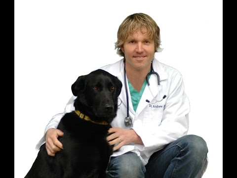 Video Top 10 Pet Diseases and Natural Remedies