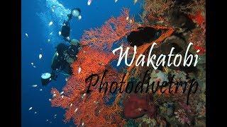 preview picture of video 'Wakatobi Dive Trip I Photodivetrip'