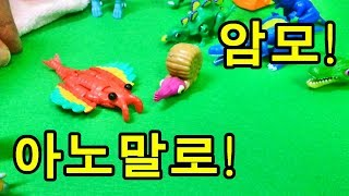 [개봉/등장]화산공원 공룡메카드 암모, 아노말로 발견!! 우연히 발견한 알에서 아노말로, 암모가 깨어났어요^^