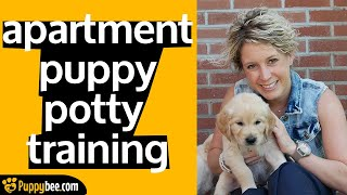 Potty Training a Puppy in an Apartment (Tips from 24 Dog Trainers)
