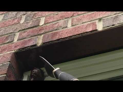 Safely Removing a Wasp Nest in Freehold, NJ