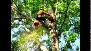 preview picture of video 'Stump Removal and Tree Service help near Globe, AZ 85501'