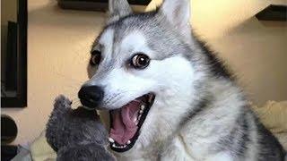 Los 5 perros que discuten con sus dueños