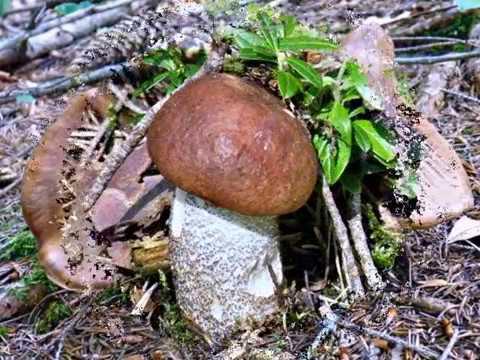 Il fungo su dita del piede anche chistotet