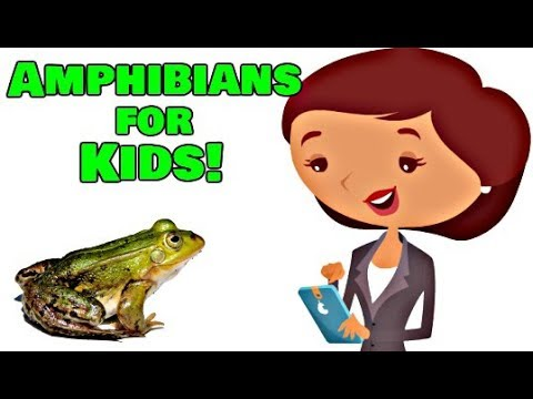 Amphibians For Kids | Animal Learning Video