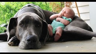 Big  Dogs Playing with Babies Compilation 2015 [NEW HD VIDEO] - Video Youtube