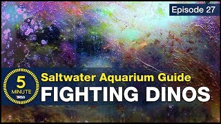 5 Minute Saltwater Aquarium Guide Episode #27 - Dinoflagellates