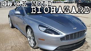 Biohazard Cars, My Latest Auction Purchase & Focus RS Problems w/ Rich Rebuilds Livestream