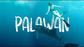 Swimming with WHALE SHARKS in The Philippines!