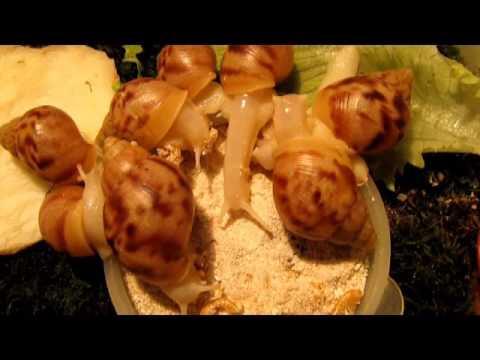 Лямблии грибки кандида
