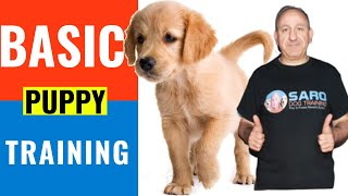 3 Easy commands to Teach your NEW PUPPY! Basic puppy training tips