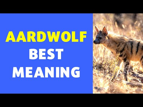 Meaning of Aardwolf  | Definition of Aardwolf [NEW VIDEO]