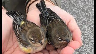 【心温まる話】衰弱して動けなくなった小鳥を手のひらで温めていると,それを見ていたもう一羽の小鳥が...