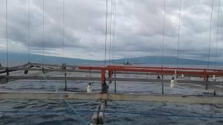 Nelayan Di Teluk Saleh