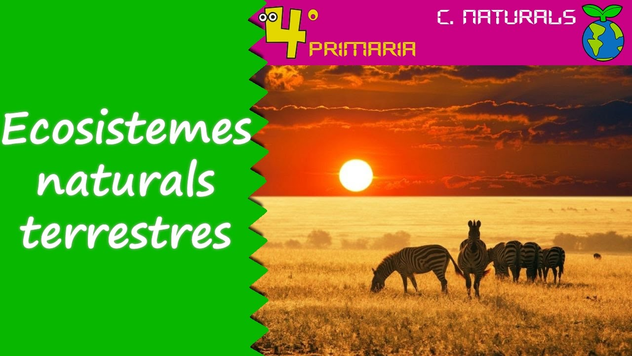 Ciències de la Naturalesa. 4t Primària. Tema 5. Els ecosistemes naturals terrestres