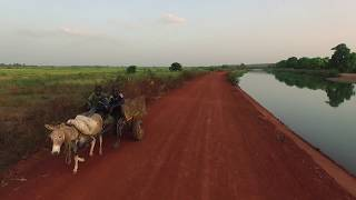 Bamako, Niger river - Irrigation