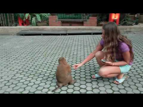 Укус обезьяны в Тайланде и последствия