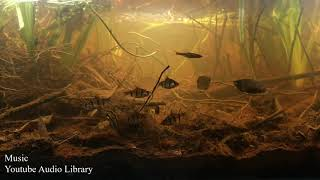 189l akwarium biotopowe. Rzeka Kepayang w porze deszczowej