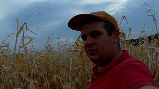 Уборка кукурузы 2018 (АМАРОК)