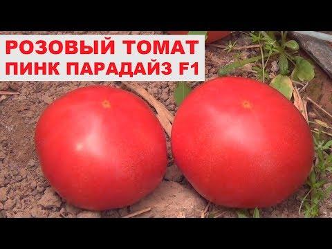 , title : 'Урожайный розовый томат Пинк Парадайз F1 - Розовый гибрид помидора