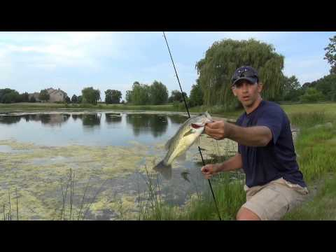 Pond Bass Fishing – Summer Weeds & Wacky Worms