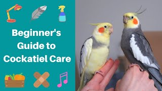 Beginner's Guide to Cockatiel Care   Parrot Care   WarGamingParrot