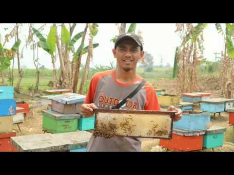 0856-4840-4735 (Bu Sofi) Pusat Jual Beli Sarang Lebah Madu Hitam di Mojokerto Jakarta Batam Gresik
