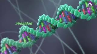 Factor Ciencia - El secreto de los genes