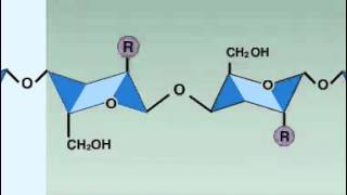 Enzymes - Lysozyme
