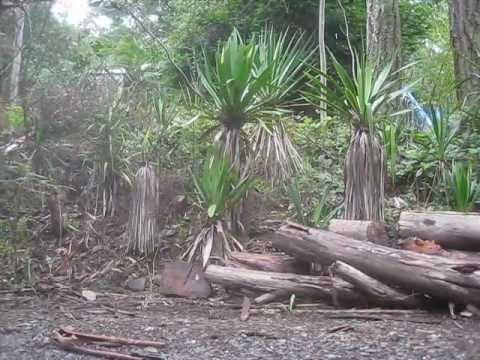 Isang listahan ng mga solusyon mula sa kuko halamang-singaw