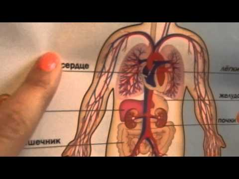 Гепатит и ран